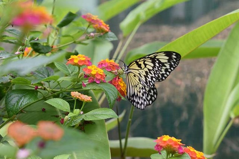 Butterfly Sanctuary, Lazi, Siquijor, Photo Credits: JC from Holland,  Website: http://imagenomad.com